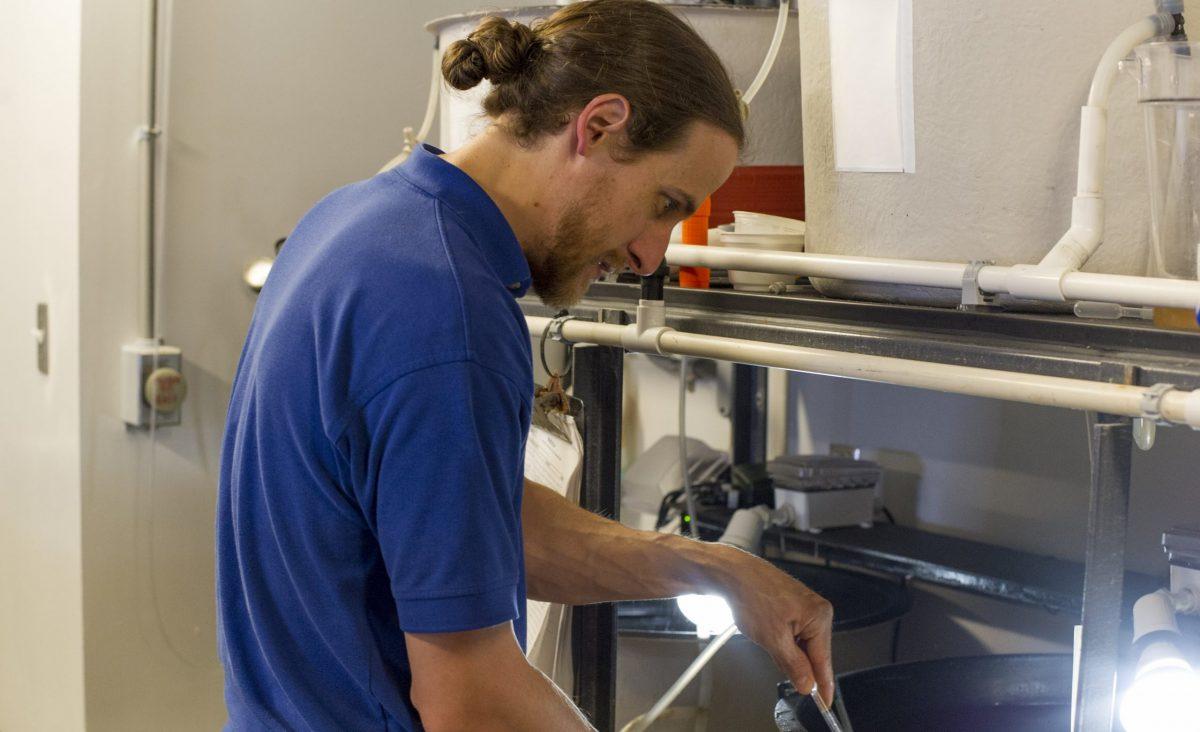 A male aquarium employee working on the nursery