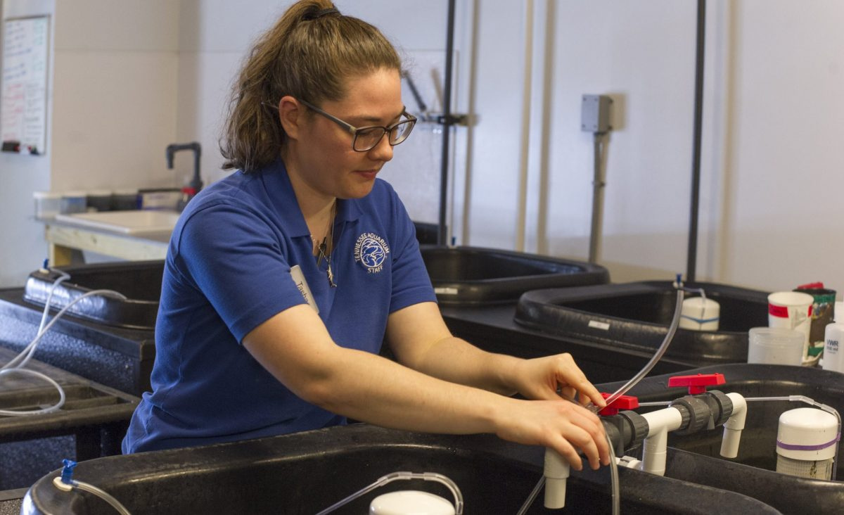 A female aquarium employee adjusting the pipes of fish nursery