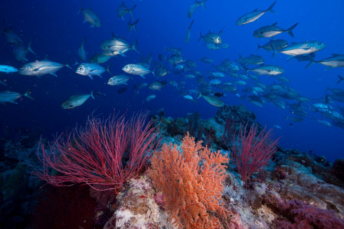 Fish swimming above the coral reef