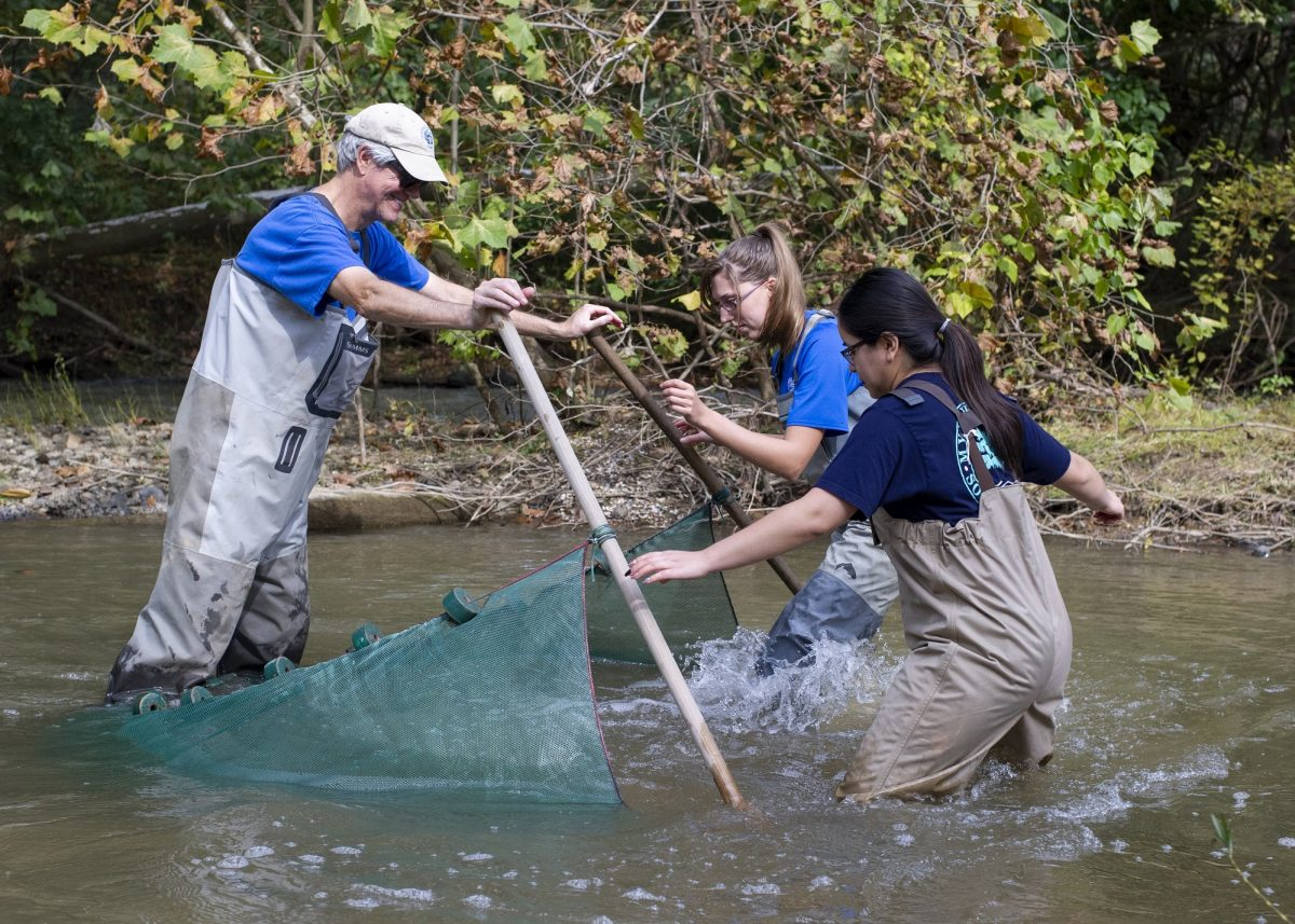 Using a fine-meshed seine net in the South Chickamauga Creek
