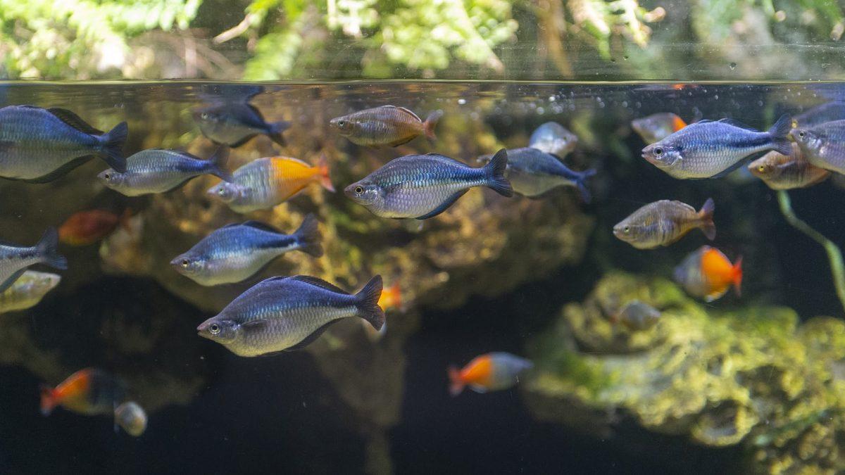 Rivers of the World hero - rainbow fish