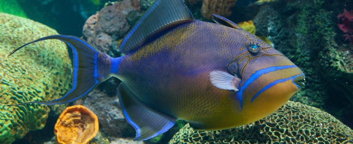 ID_QueenTriggerfish_1200x490
