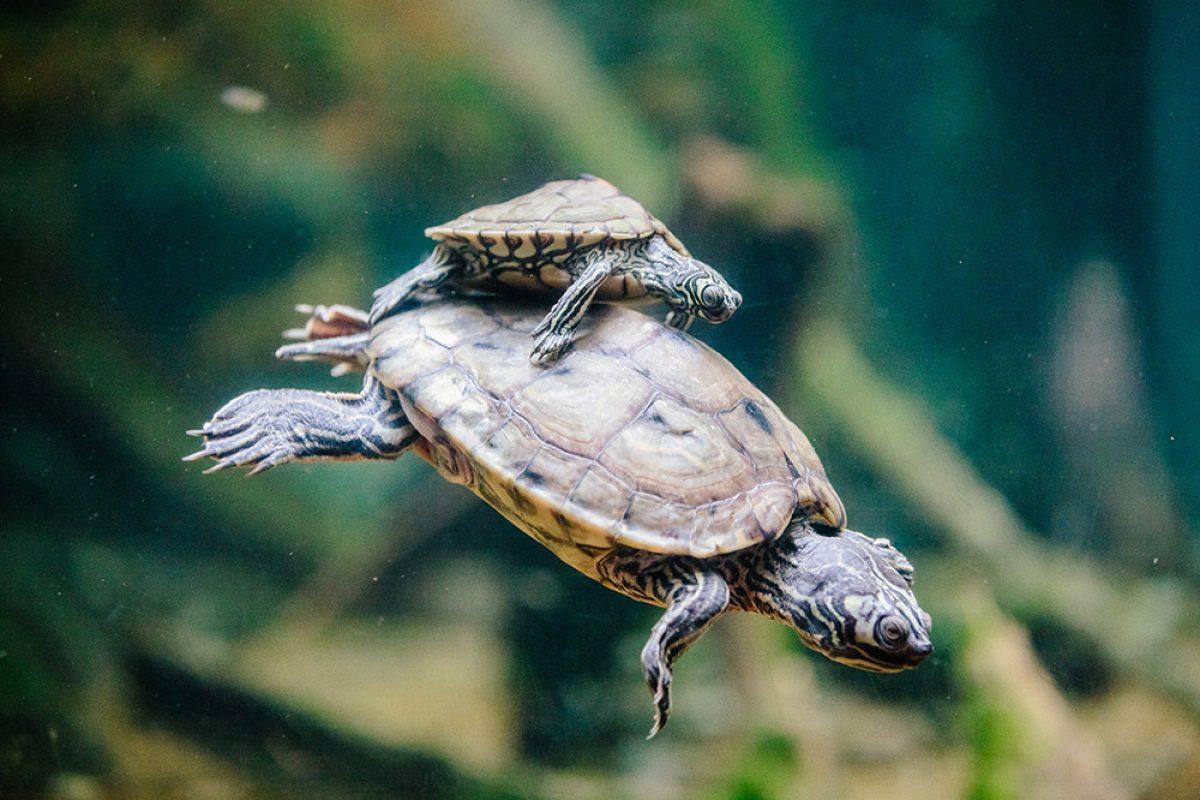 turtlelove