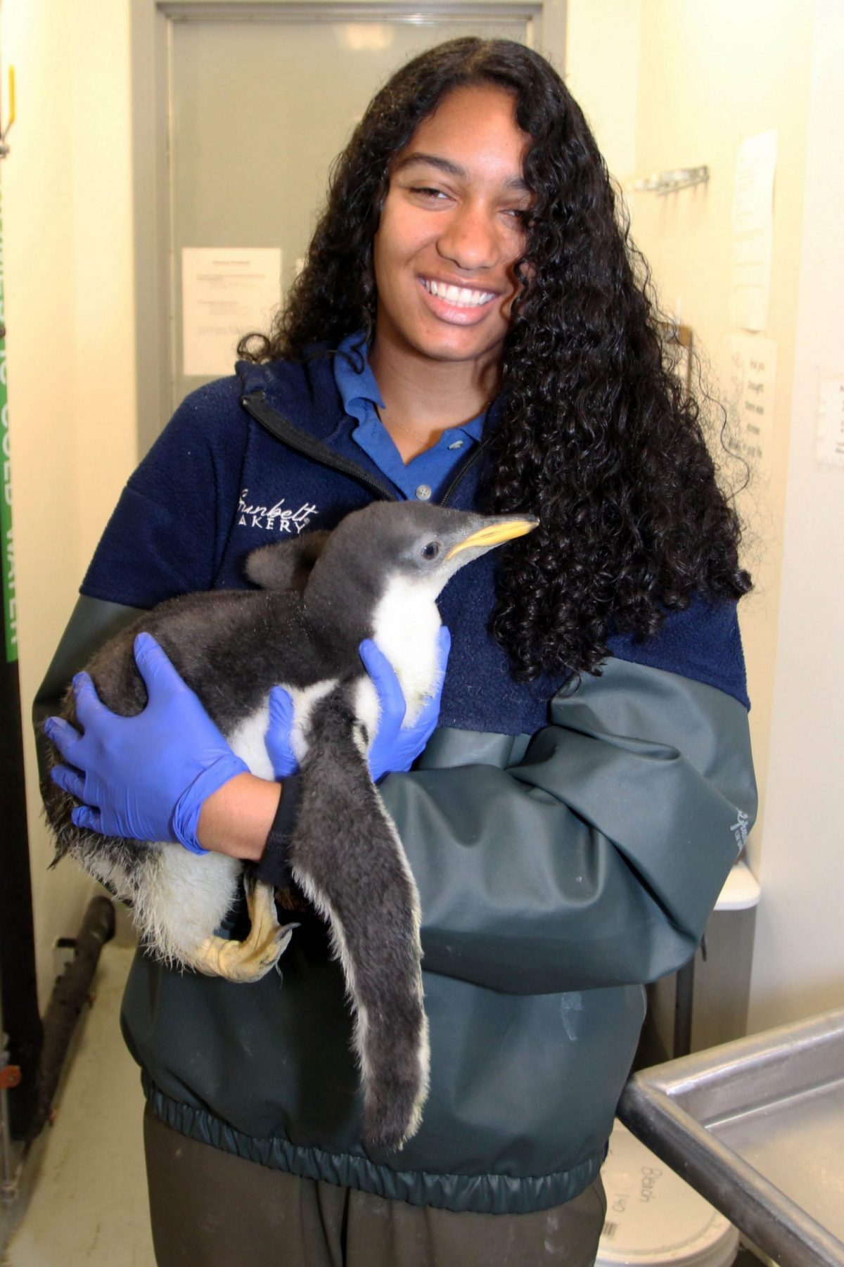Amber Lowery holding baby penguin