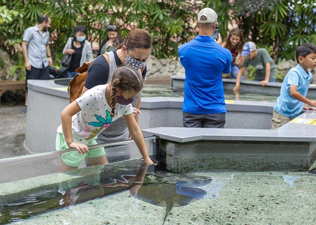 Guests enjoying the Stingray Bay touch tank