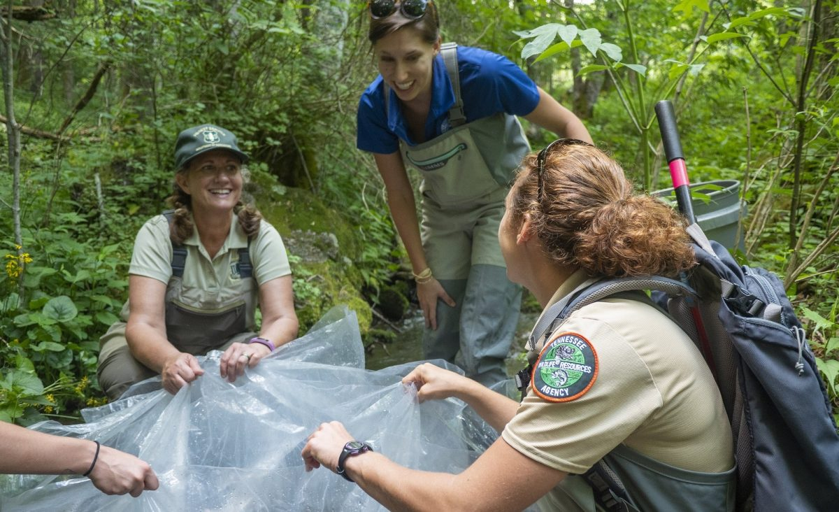 US Forest Service, TWRA and Tennessee Aquarium staff in the field