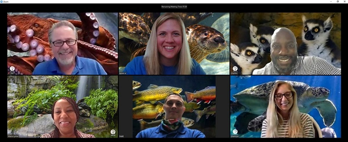 screenshot from a zoom meeting featuring various Aquarium backgrounds