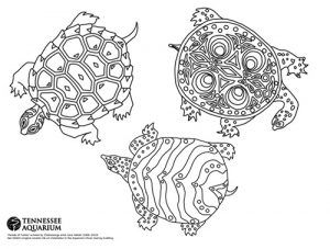 coloring sheet with three turtles