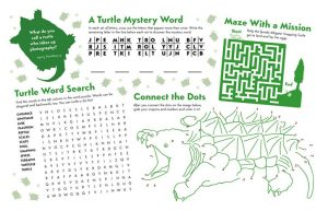 printable turtle activity sheet