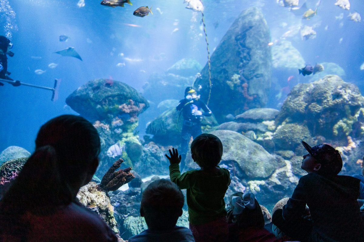 kids looking into the Secret Reef tank