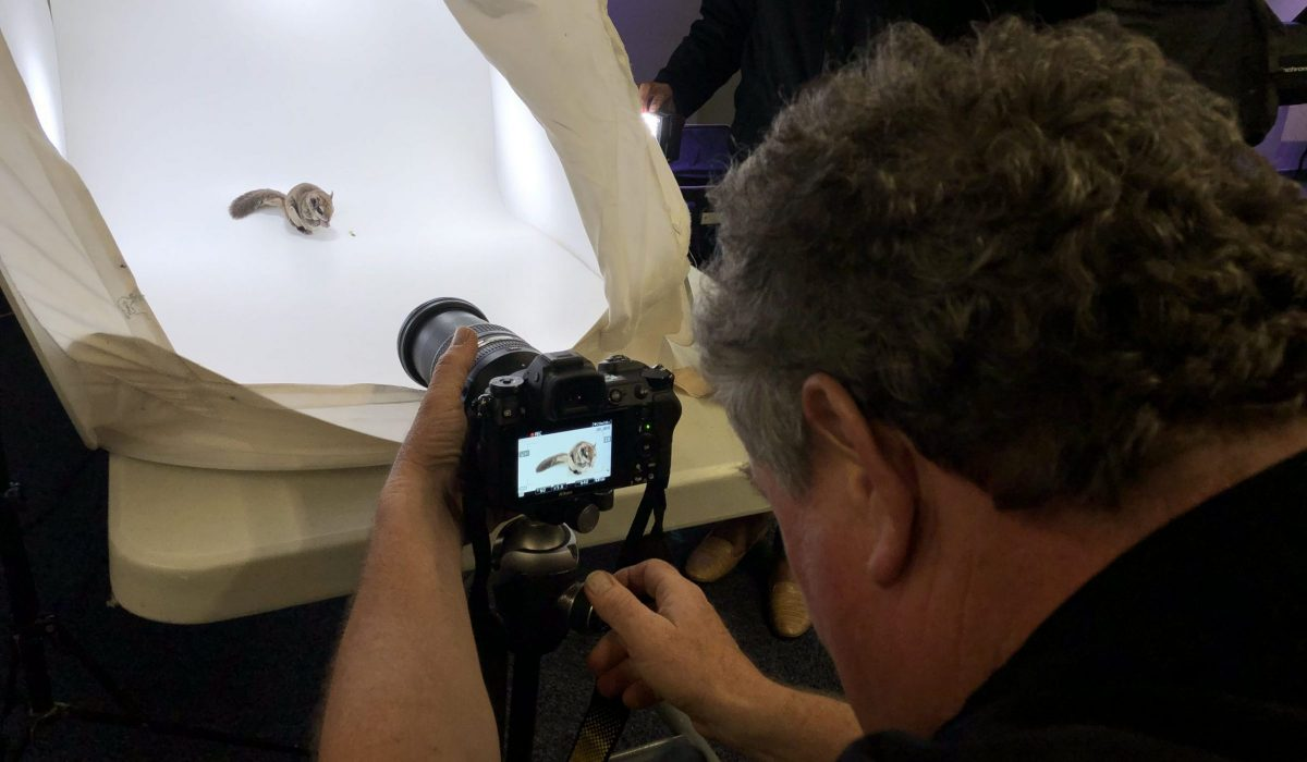 Joel Sartore photographing flying squirrel