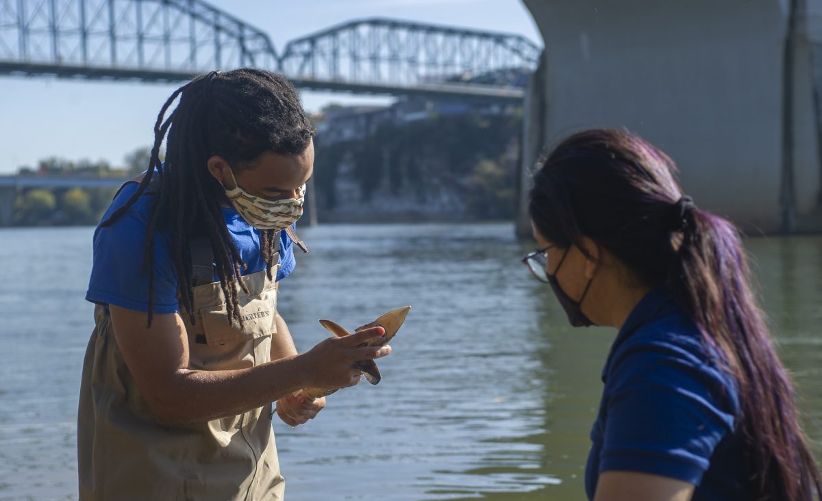 scientists viewing juvenile lake sturgeon before releasing it into the river