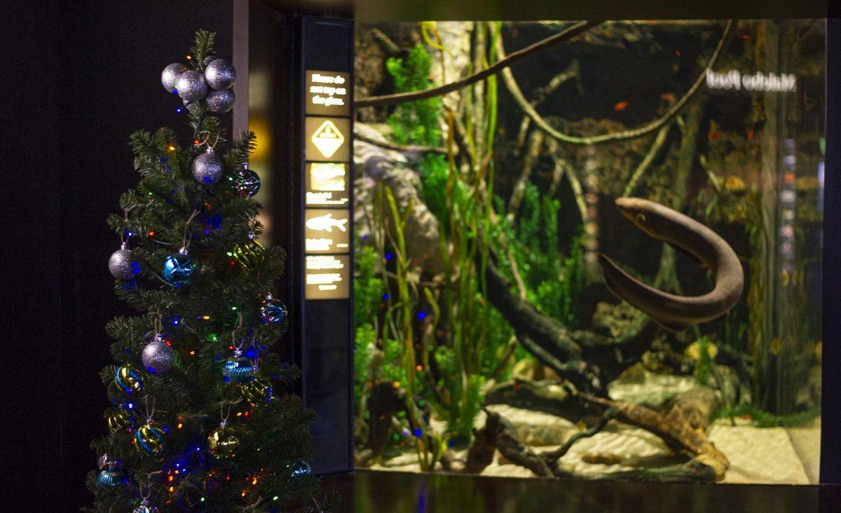 Christmas tree in front of electric eel exhibit