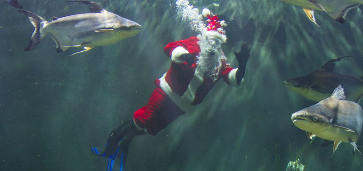 SCUBA Claus diving in River Giants tank