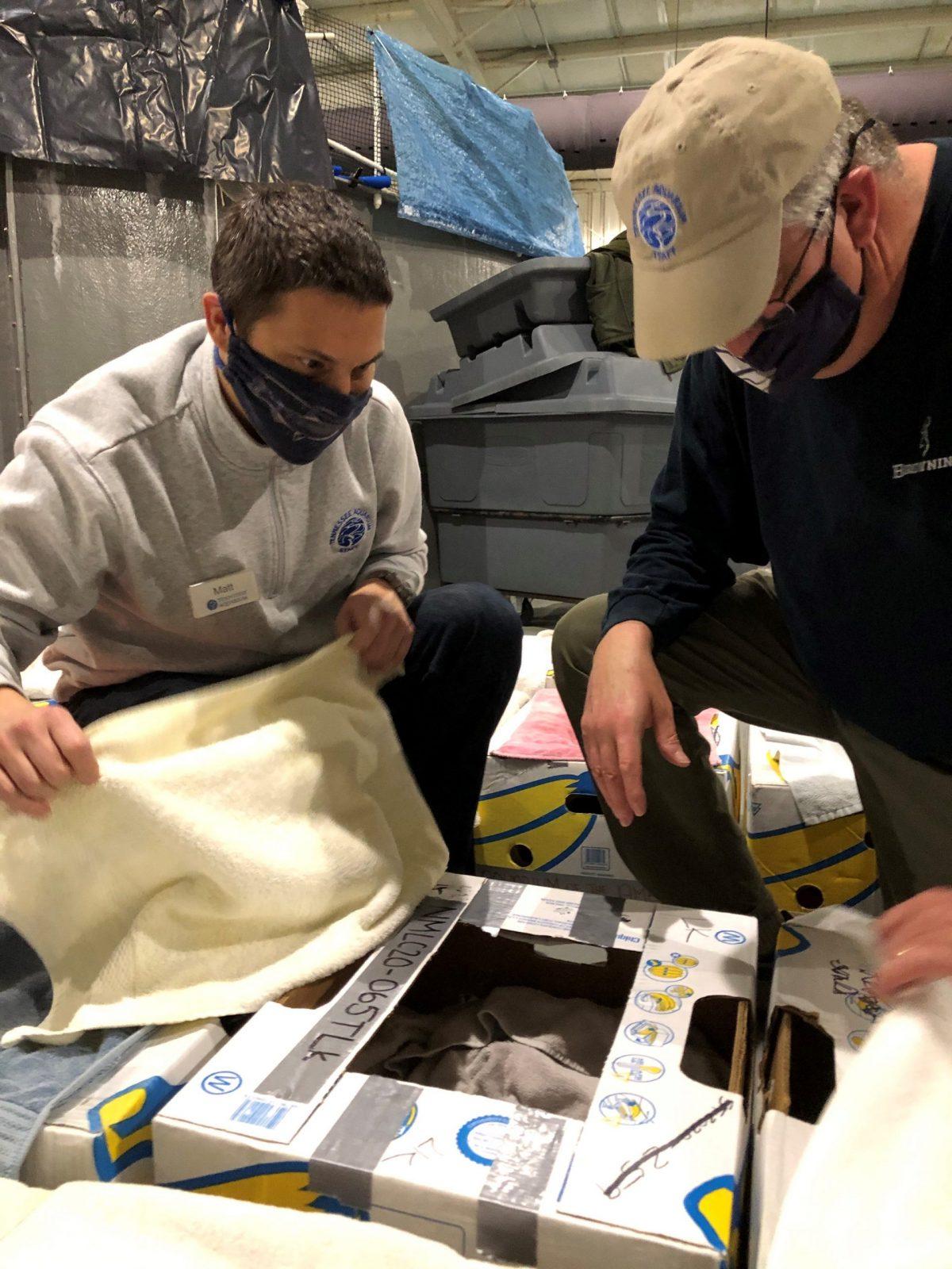 Aquarium staff examining turtle
