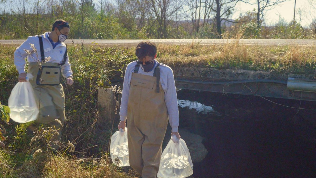 Curator of Fishes Matt Hamilton, left, and Aquarist II Adam Johnson carry oxygenated bags filled with endangered Barrens Topminnow to a Middle Tennessee release site