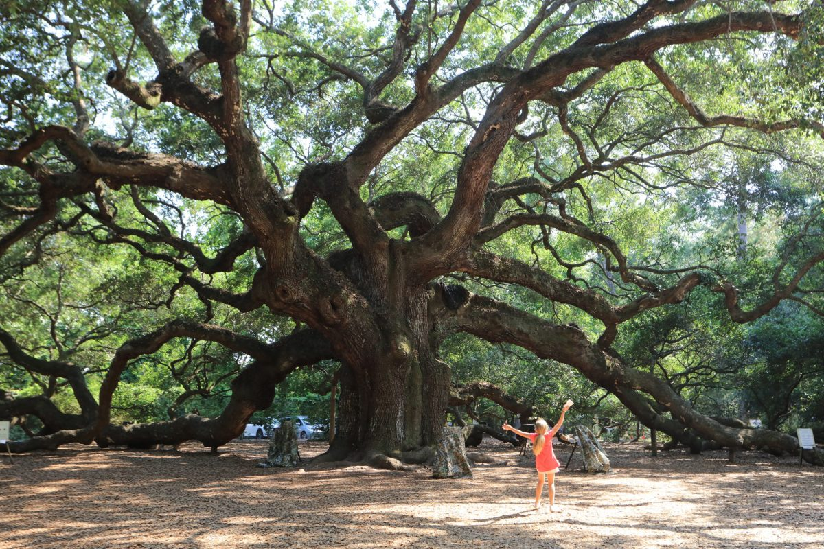 A young girl celebrates the outdoors under Charleston's famous Angel Oak, estimated to be 400-500 years old