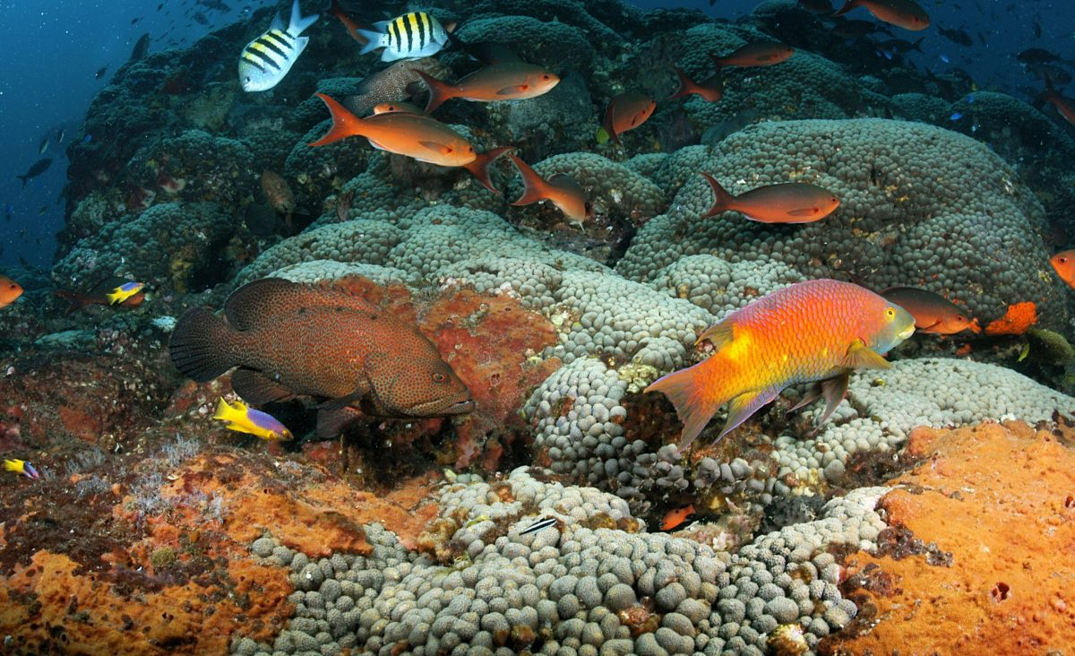 Fish swimming around a reef on Stetson Bank