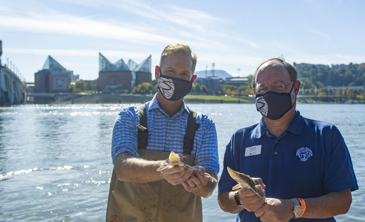 Aquarium board chair Chris McKee, left and President and CEO Keith Sanford hold juvenile Lake Sturgeon prior to their release into the Tennessee River