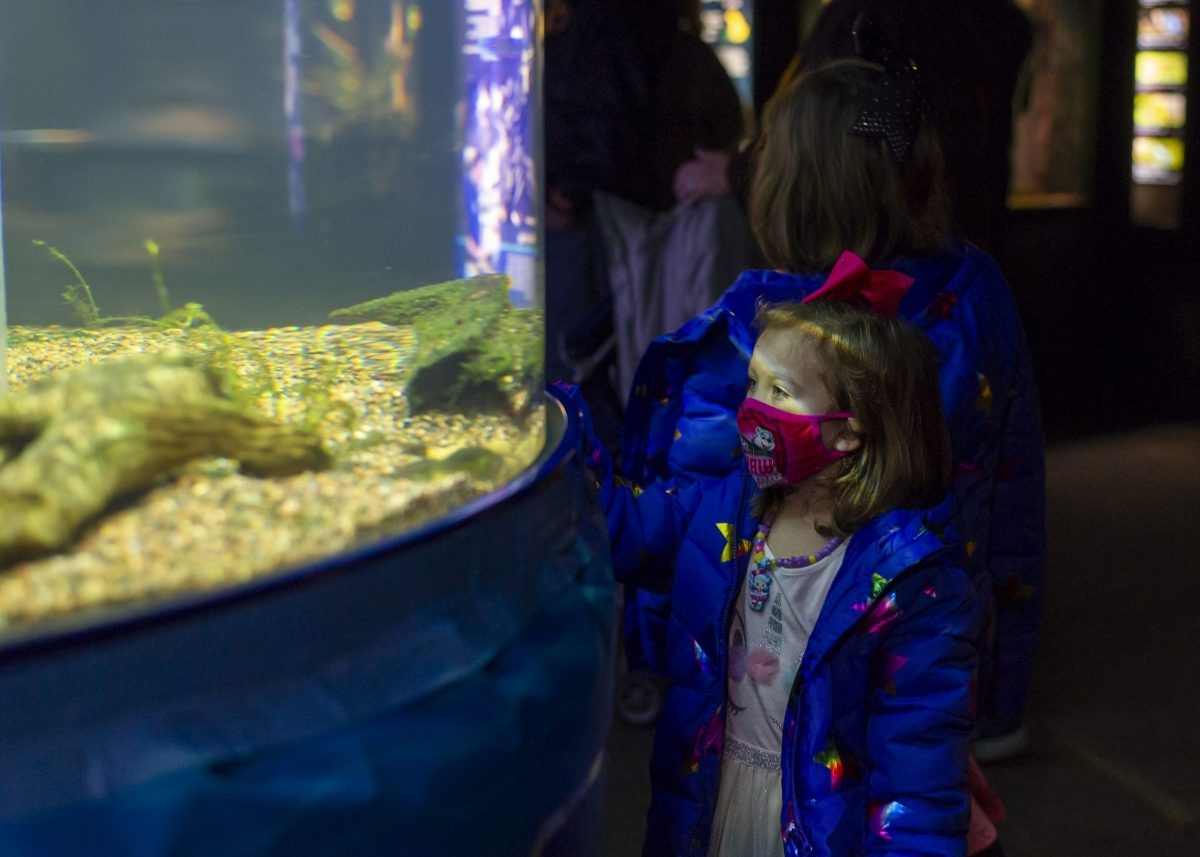 Young girl looking at pop-up tank