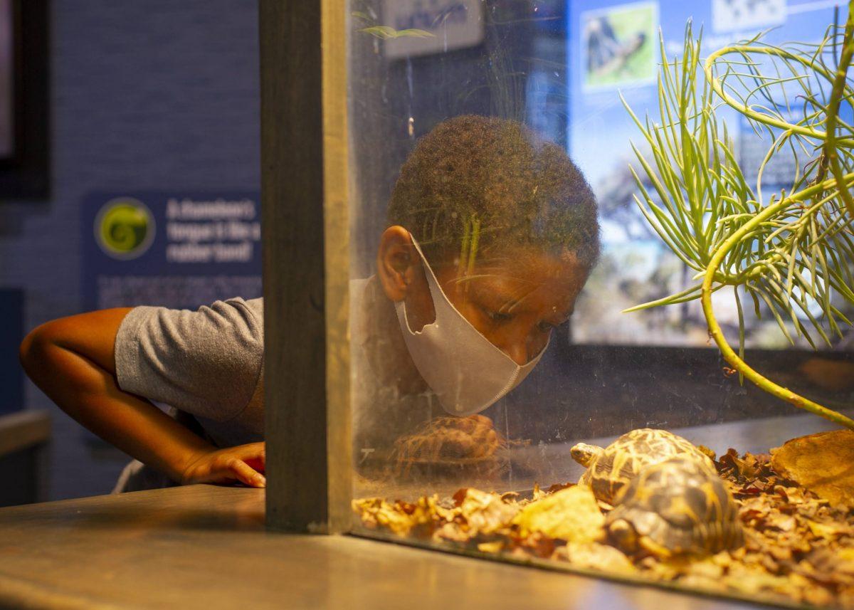 Child looking at Radiate Tortoise