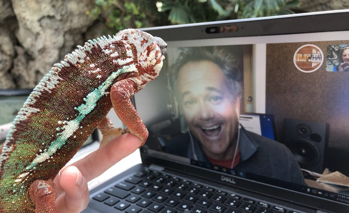 Chameleon starring in a video-conferenced media appearance