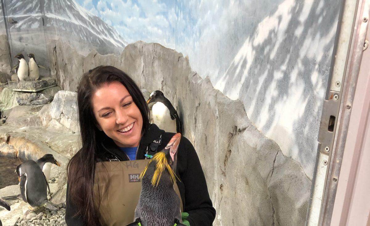 Gentoo Penguin stars in live-streamed media appearance