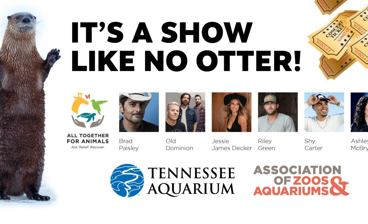 graphic featuring country artists and river otter with text that reads It's a show like no otter!