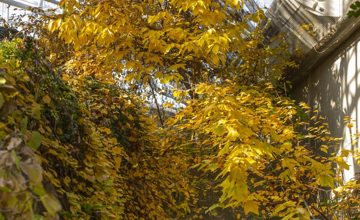 Fall foliage in the Appalachian Cove Forest gallery