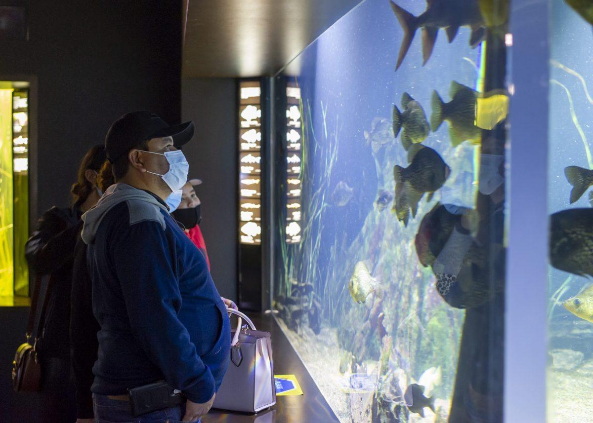 guests viewing Reelfoot Lake exhibit