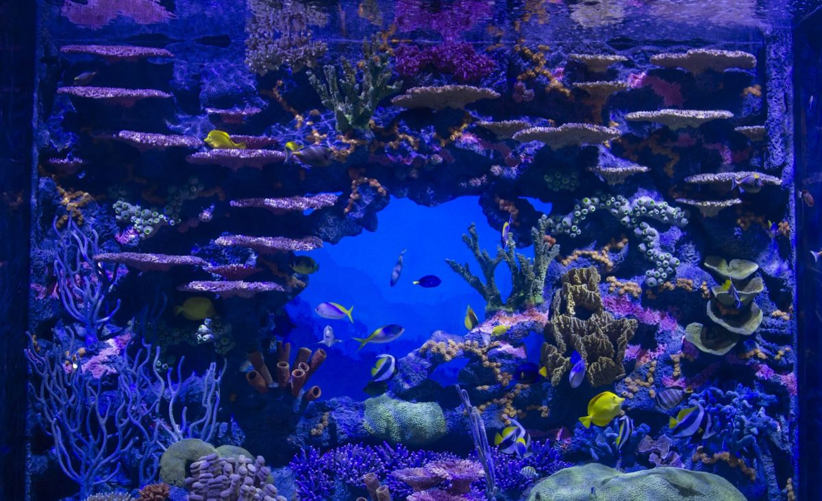 tropical fish swimming in the Indo-Pacifiic tank