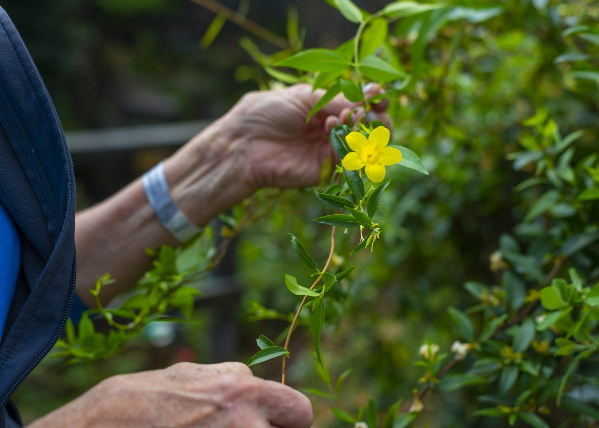 Lead Horticulturist Christine Hunt examines a native wildflower in the Appalachian Cove Forest gallery