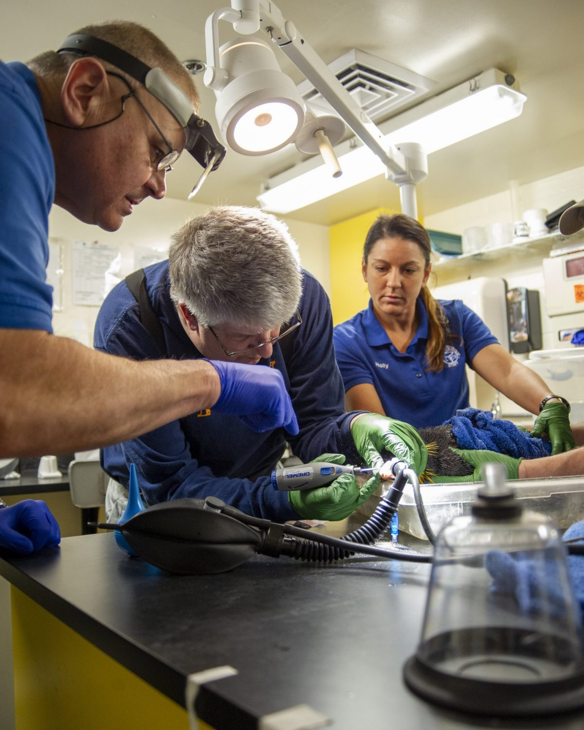 Chattanooga dentist Dr. Ernie Minges, Tennessee aquarium staff veterinarian Dr. Chris Keller and Senior Care Specialist Holly Gibson perform a surgical procedure to repair a penguin's injured beak.