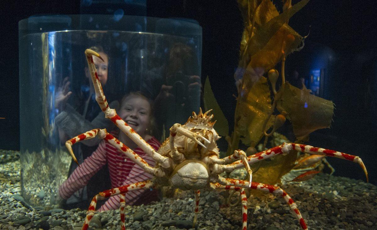 guest inside spider crab pop up tank window