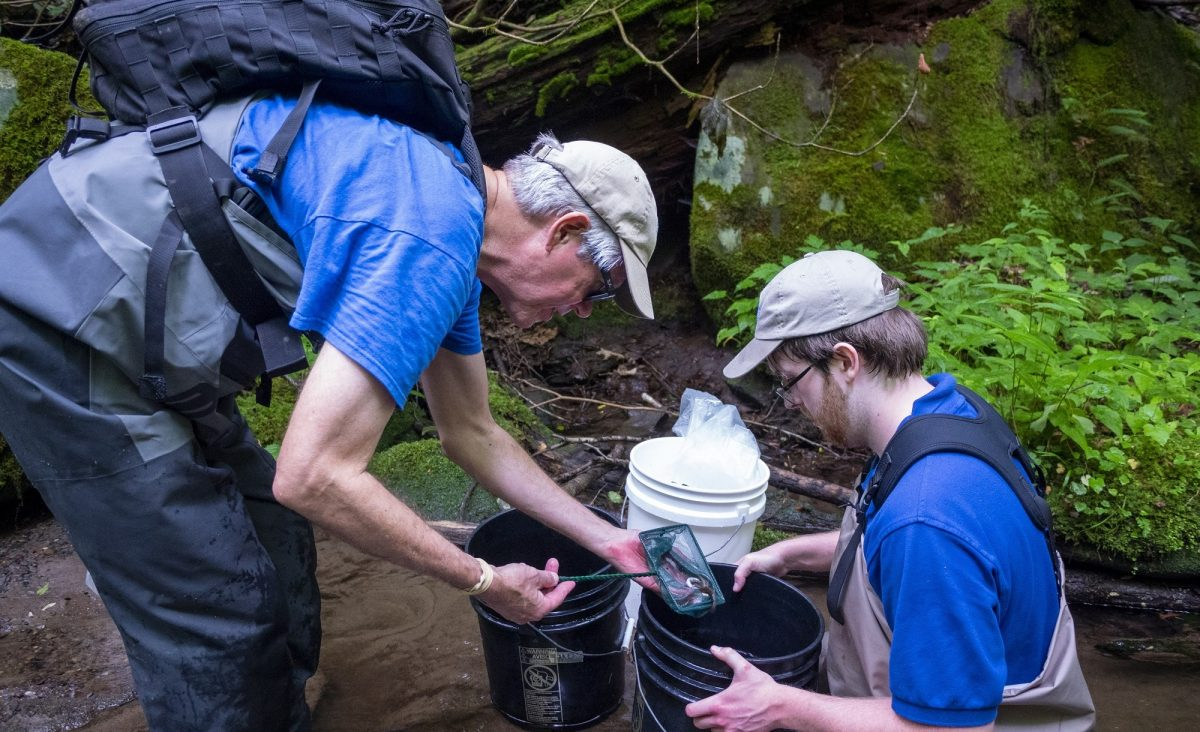relocating juvenile brook trout into buckets for release