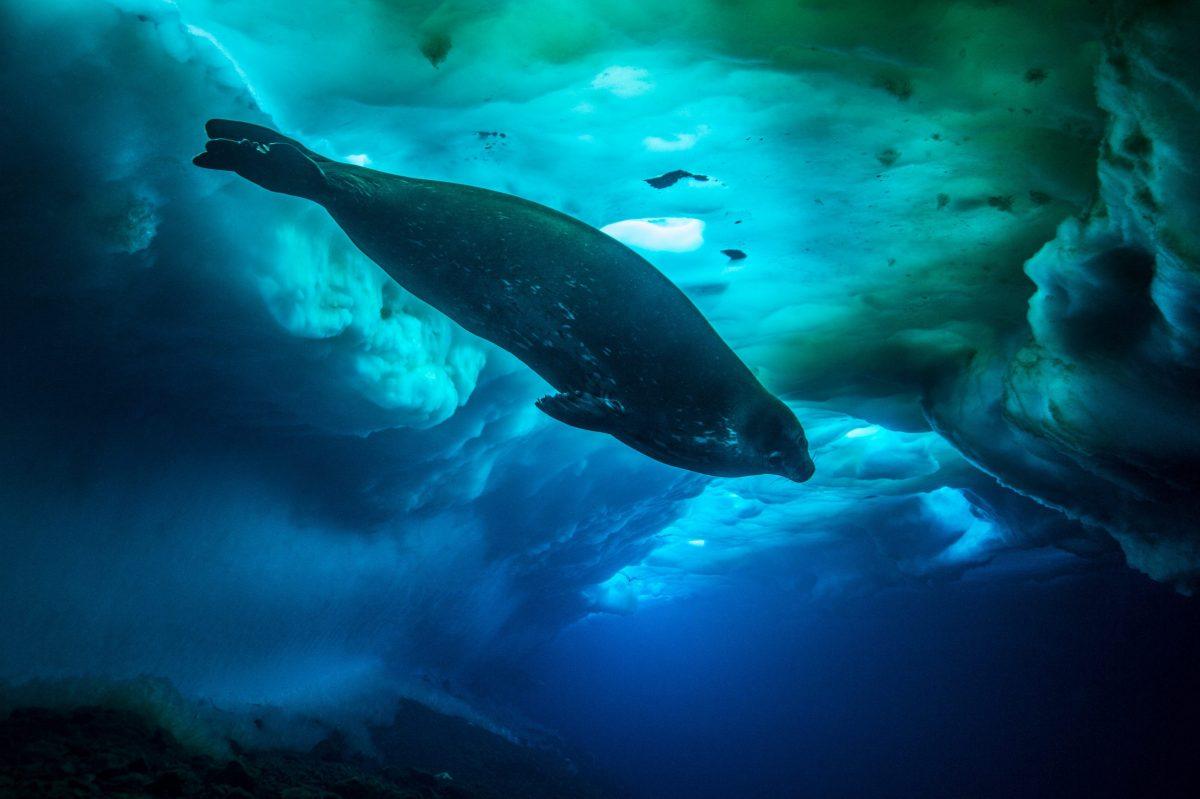 Seven Worlds, One Planet: Ep 001_Antarctica