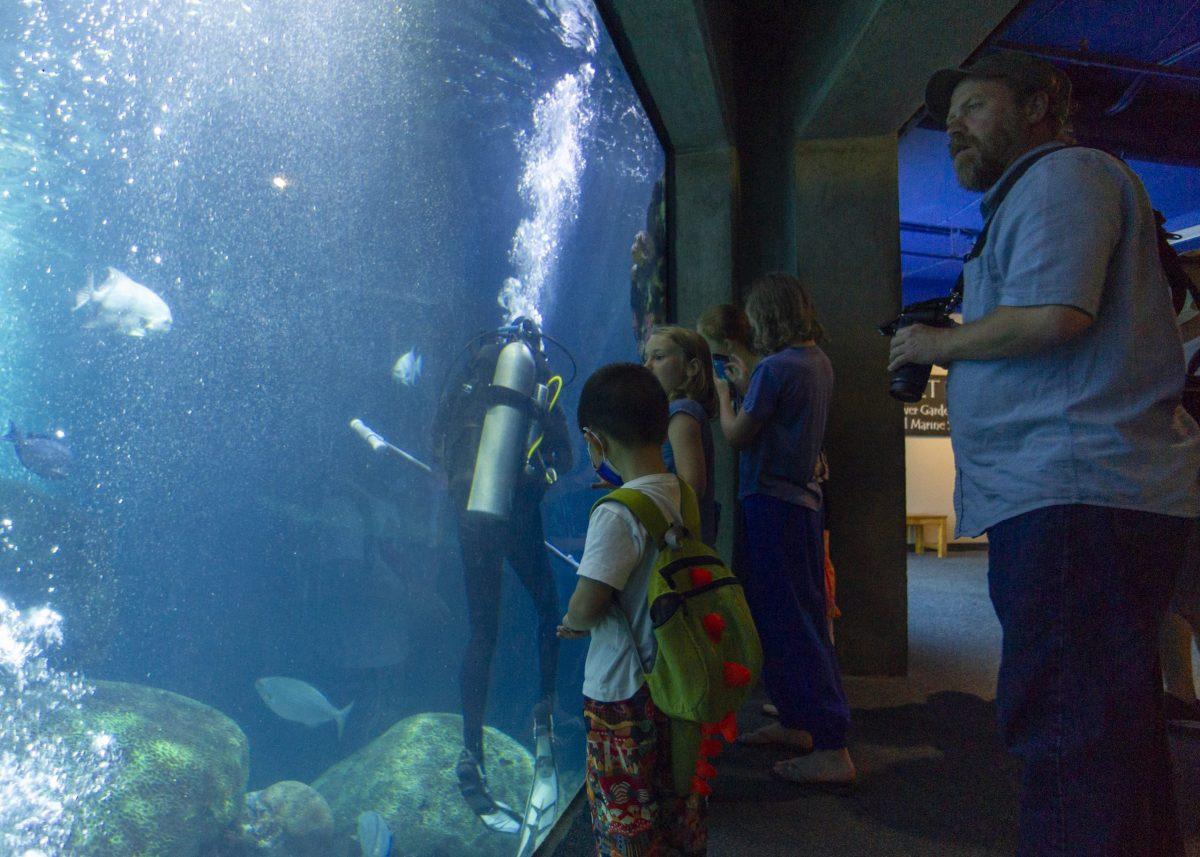 Guests look into the Secret Reef exhibit