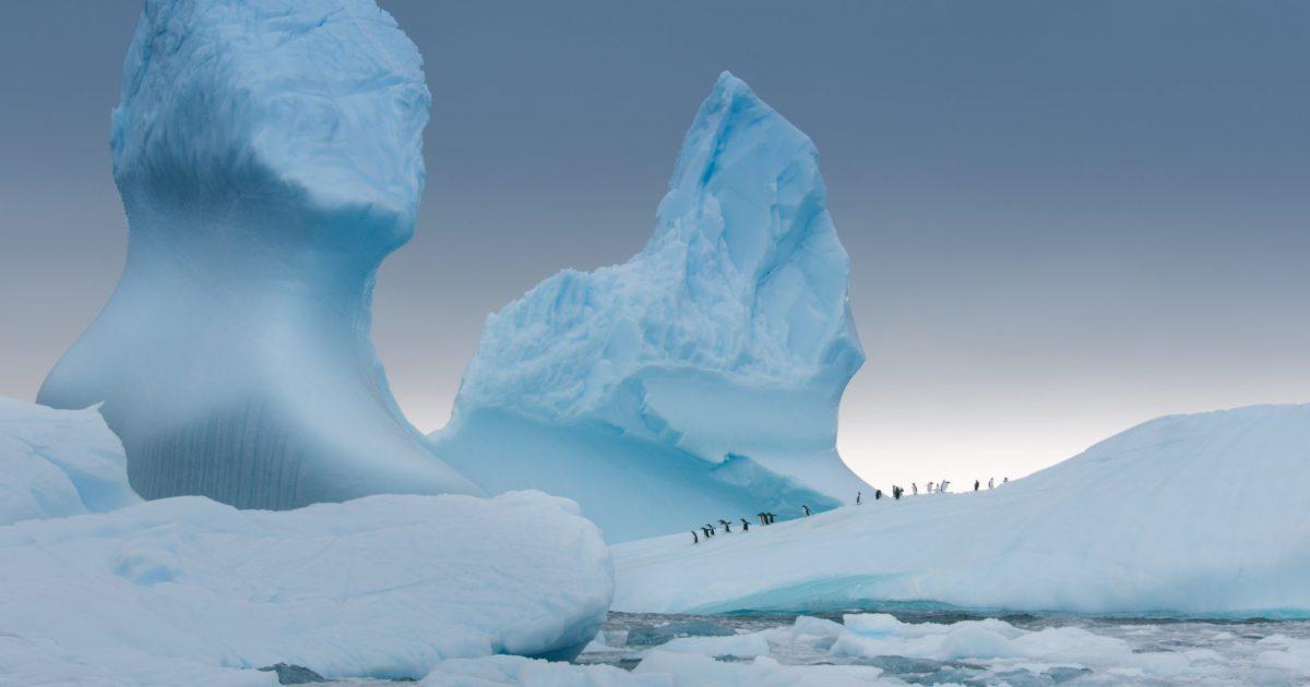 cropped-04_Antarctica-Photo-Select_Gentoo-penguins-on-iceberg-scaled-1.jpg