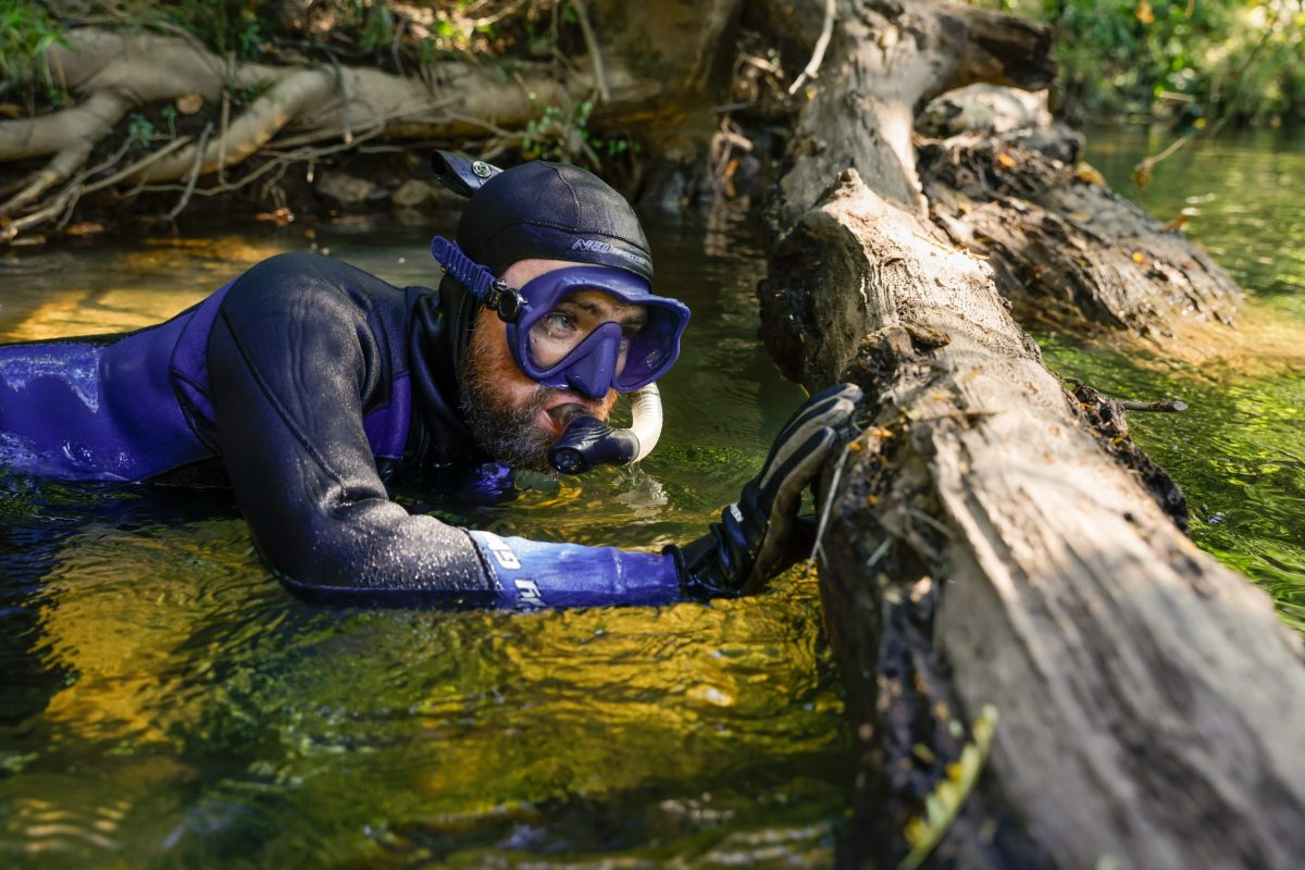 Senior Aquarist Ben Stenger pauses before dipping back below the surface of Holly Creek in pursuit of Bridled Darters