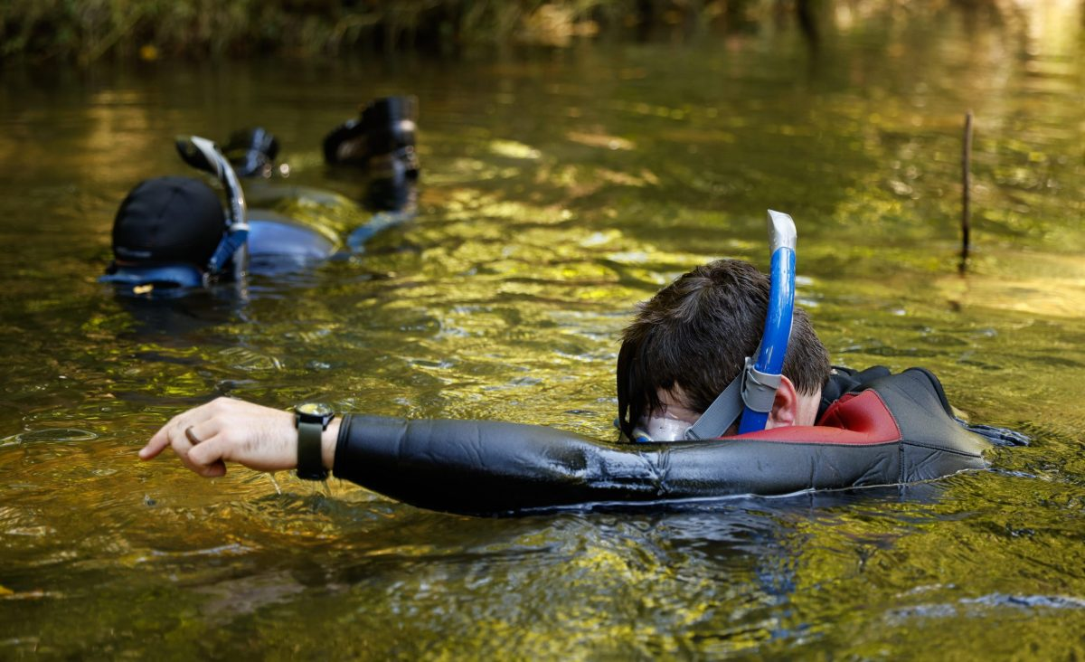 Snorkelers point to the location of a Bridled Darter in Holly Creek