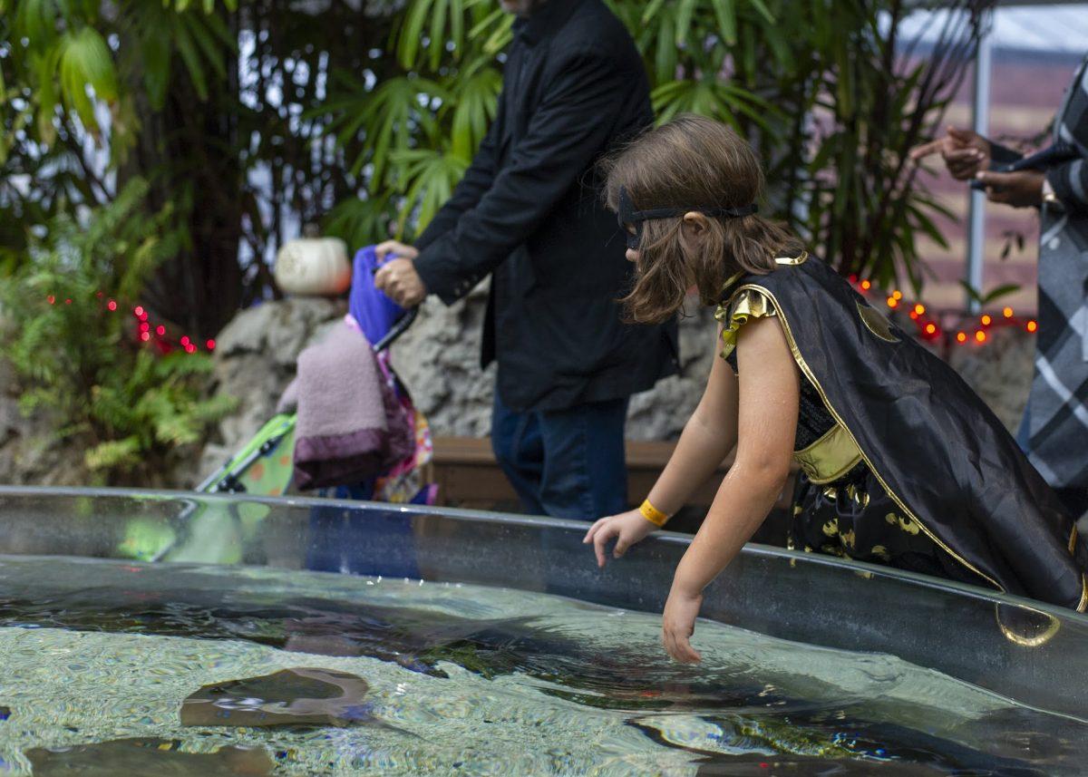 girl in superhero costume at Stingray Bay touch tane