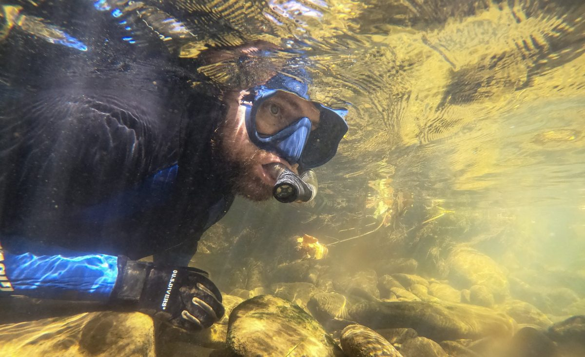 A snorkeler from the Tennessee Aquarium looks beneath the surface of Holly Creek for Bridled Darters