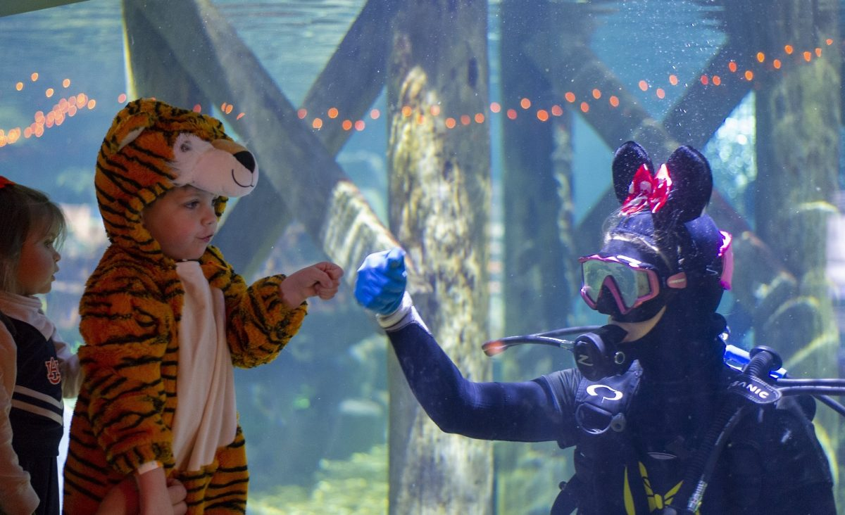 guests interacting with diver in halloween costumes