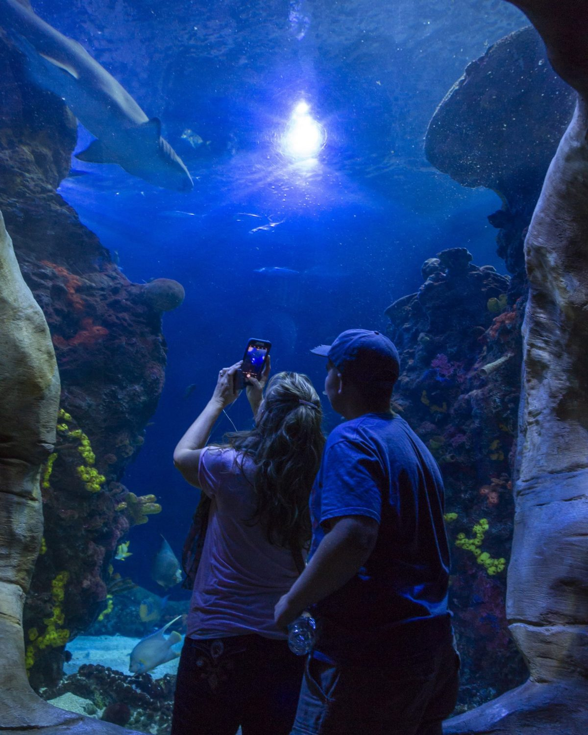 Visitors look up at a Sand Tiger Shark swimming above them in the Secret Reef exhibit
