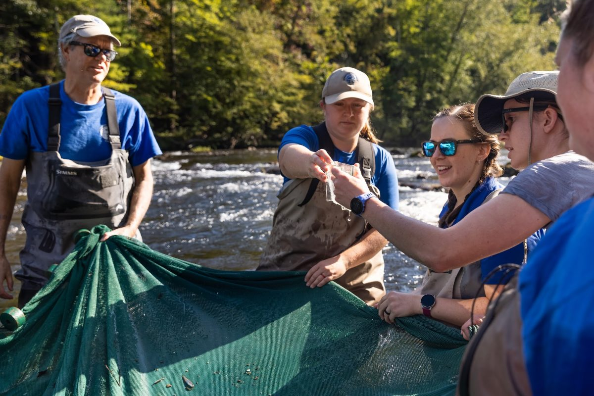scientists viewing fish pulled from stream