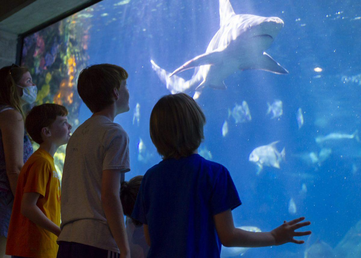 Guests watch a Sandbar Shark swimming through the Secret Reef exhibit