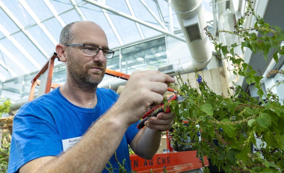 Horticulturist II Austin Prater prunes a plant in the Butterfly Garden